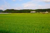 夏の粟生を行くフラワ2000形