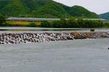 吉井川を渡る「さくら」