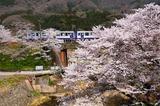 桜の木津川橋梁を渡るキハ120形