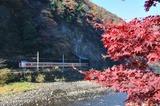 紅葉の井倉峡を行く特急「やくも」