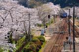 桜の笠置駅を出るキハ120形