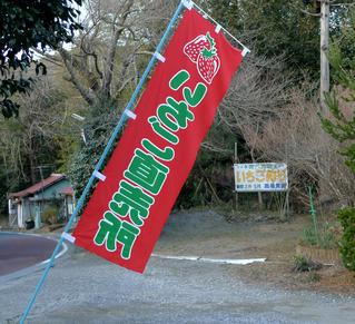 千葉県君津市清和のイチゴ狩りのできる農園「高橋農園」