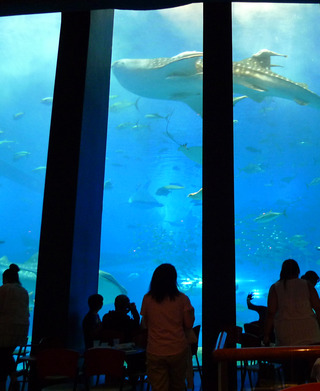 カフェ「オーシャンブルー」Cafe Ocean Blue @美ら海水族館