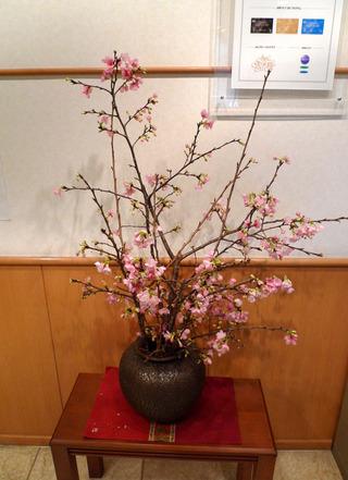 日本一早いさくら祭り「八重岳桜まつり」 @沖縄県本部町