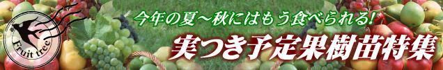 実付き予定の果樹苗特集タイトル