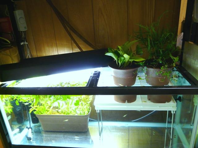 鉢植え水槽