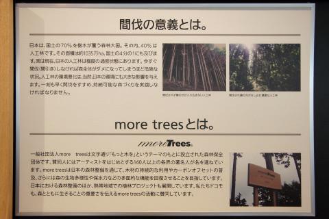 間伐によって森は守られ、森林資源は育っていく。