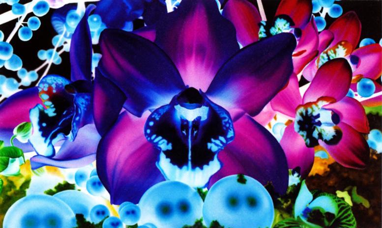 *天上的色,長在地上的花:用五個觀點來看 蜷川實花 (NinagawaMika) 5