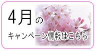 7万円からの婚活!ジュブレの桜咲くキャンペーン実施中!!